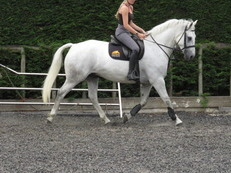 SUPER RIDING CLUB HORSE ALROUNDER