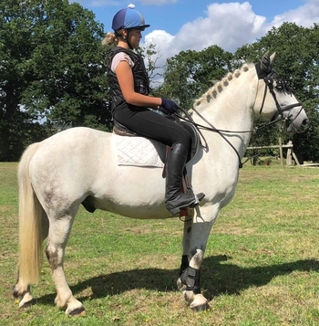 Fun Irish Gelding, For Sale Dorset