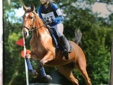 14. 3 bay riding club/all-rounder mare