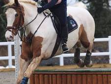 Experienced Rider Looking for 16hh & Over Loan Horse/LWVTB