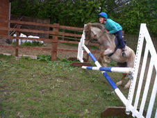 Mr Jinx section A gelding 2nd pony