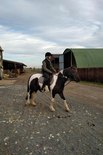 Confidence giving 14.2hh skewbald mare for loan