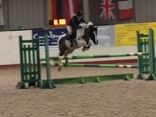 Super competition pony for loan