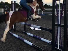 Incredible Pony for sale