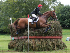 Eventer/ Showjumper/ Allrounder