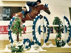 Miss majestic 16 hand mare