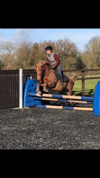 Fantastic second pony for sale