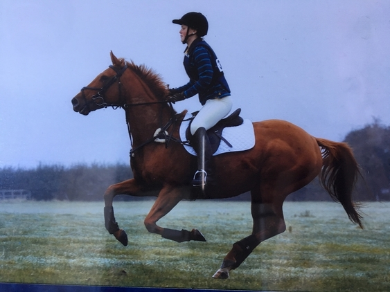 Beautiful Chesnut Mare for Part-Loan