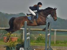 Showjump/XC jump anything!