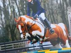 super smart all rounder/competition pony