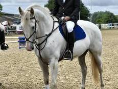BEAUTIFUL SCHOOLMASTER FOR SALE