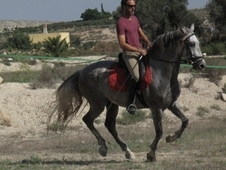 Ever dreamed of owning a Spanish Horse