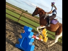 15hh horse share wanted