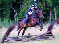 16. 2 15yo dark bay all-rounder gelding