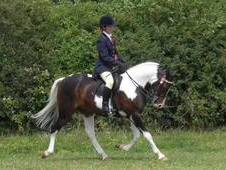 Stunning coloured pony for sale