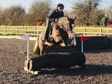 Super Fun 15hh Bay Cob Mare