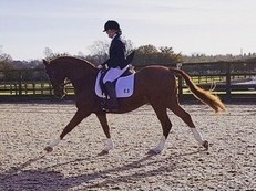 Dressage star needs a 5* home!