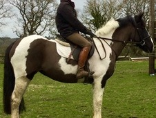 All Rounder for Sale Dorset