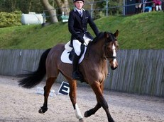 Superb Allrounder Excels in Dressage