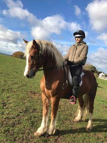 15.1/2 chestnut ride and drive gelding
