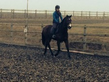 5 yr old mare ex racer