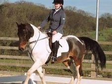 Sharer wanted or full loan for pony hertford / essendon area