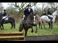 16.1hh showjumping/ eventing mare