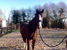Unbroken 3yr Gelding For Sale