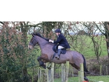 George-17. 2hh ID for sale