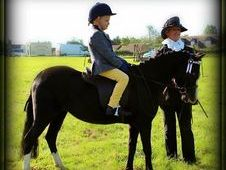 11. 2hh 7yr old Black welsh Mare