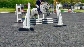 13.2hh pretty grey 11 year mare
