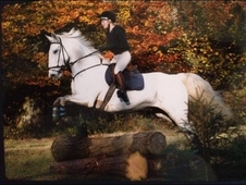 16 year old 16. 2 Irish sport horse