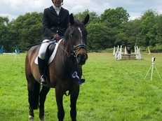 Sharer Wanted for Lovely Mare