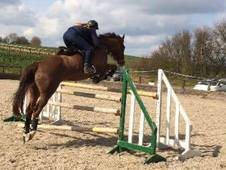 16. 1hh Quality Horse