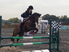 Fabulous 13. 2 Pretty Welsh C Gelding