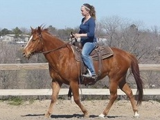 stunning quarter horse for sale
