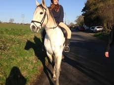 16.2hh NZ Thoroughbred for loan