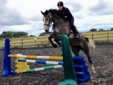 Fantastic 5yr old IDx sports horse. Loves to jump and please.
