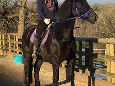 Stunning 15.2hh Gelding - charity rehome