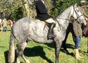 Experienced Rider Needed South West