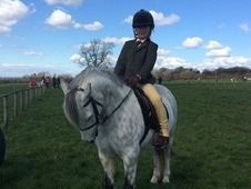 Welsh section a 12 hh gelding great first pony