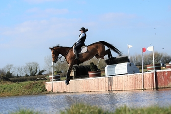 16.3hh bright bay Irish Sports Horse Mare by Catherston Dazzler