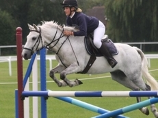 13.3 hunting, jumping pony