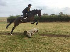 KIND, GENUINE TB - ALL ROUNDER / HUNTER