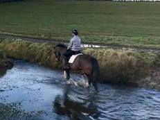 Fantastic smart All-rounder/Riding Club 6yr Old mare