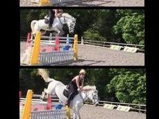 *FOR SALE 14.2 grey mare*