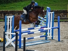 WANTED -Competition Horse for Loan
