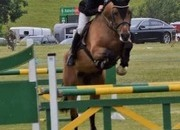 6yr old showjumping horse