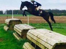Cracking All-rounder/ Hunter / eventer!!