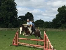 Extremely talented 14. 1hh Welsh x gelding